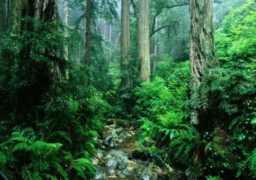 Guia de investimento direto em ativos florestais