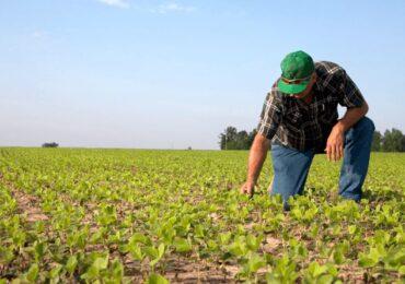 Cédula de Produto Rural | Tudo o que você precisa saber