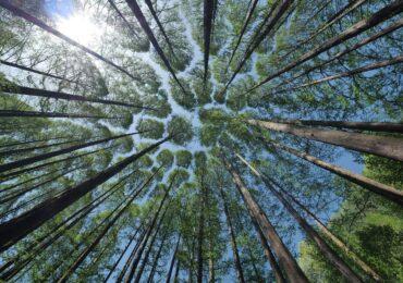 Invista no setor florestal de forma simples, segura e rentável