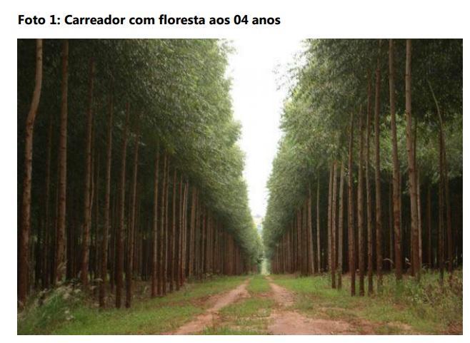 floresta de eucalipto, agroflorestal, bloxs investimentos