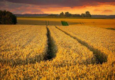 Com safra recorde, agronegócio brasileiro ganha novos mercados no mundo