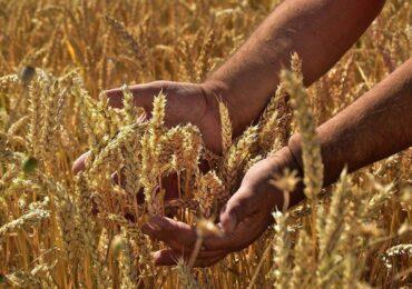 Agro brasileiro garante a segurança alimentar do planeta, mostra Embrapa