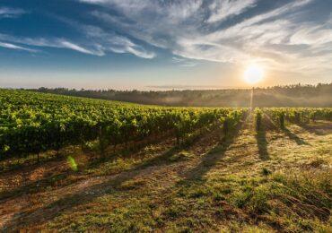 Produção em alta promete mais um ano espetacular para o agronegócio