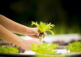 Agritechs impulsionam produtividade e eficiência no campo