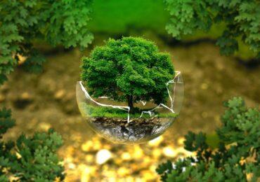 Fundos florestais atraem cada vez mais investidores institucionais no Brasil
