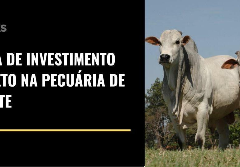 Guia de investimento direto na pecuária de corte